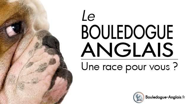 Race bouledogue anglais