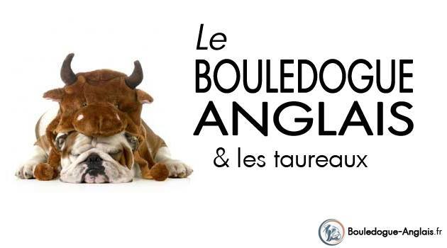 Origines du Bulldog Anglais